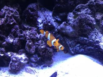 Marlin & Nemo